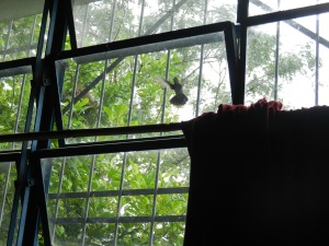 Hummingbird at my window, midflight. Everyday. Love it.