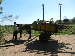 Vicente, 16,  returning to the farm with the horse and cart full of mandioca and sugar cane.