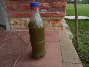 Bottle of mosto, a sugar-water drink made from crushed sugar cane. VERY sweet!