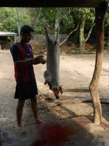 The family's only son dressing a freshly killed pig.