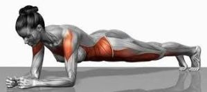Proper plank pose highlighting the muscles it strengthens throughout the core. This will whittle your middle.
