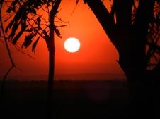 Ox cart- biodig video- sunset 006
