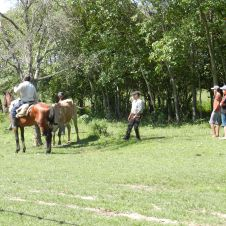 It takes several men to kill and 'process' the cow for the fiesta BBQ. A local cowboy helps get the steer into place.
