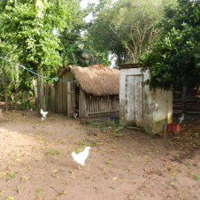 Chicken coop and old outhouse