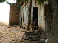 A goat walks into a kitchen...