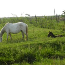 Roadside sweetness: a foal rests on the bank of a ditch while its mama grazes nearby