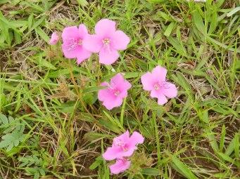 Flowers on the prairie