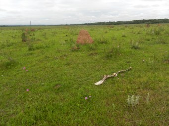 El Dia de los muertos - no Day of the Dead would be complete without a partial cow skeleton near the cemetery. Actually, this is not an uncommon sight in the campo among the hundreds of termite mounds.