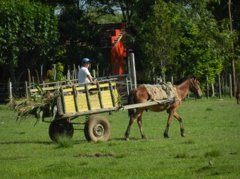 One of my favorite senoras returning from a morning harvest of sugar cane and mandioca. And it was her birthday.